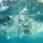 Три четверти рыбы в самой длинной реке Нил в мире содержат микропластик