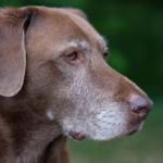 Сухой корм для собак: особенности выбора